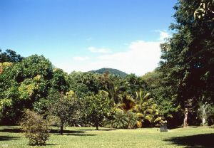 Gallop Botanic Reserve, incorporating Cooktown Botanic Gardens (1996); Heritage Branch staff