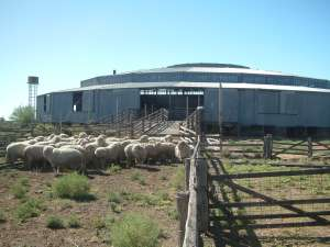 Isis Downs Woolshed Complex ; Heritage Branch staff