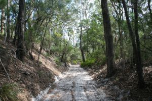 Cooloola Tramway - Cutting (2012); Heritage Branch