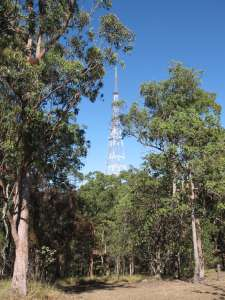 Mount Coot-tha Forest ; Heritage Branch staff