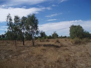 Site of Shearers' Strike Camp (2009); Heritage Branch staff