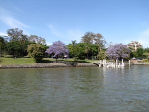 Mowbray Park (2011) from Brisbane River; Vic Bushing