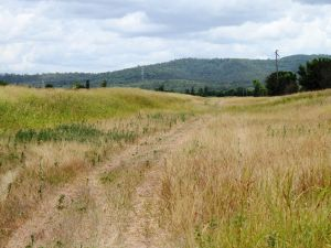Corduroy Road Remains, Laidley (2009); Heritage Branch staff